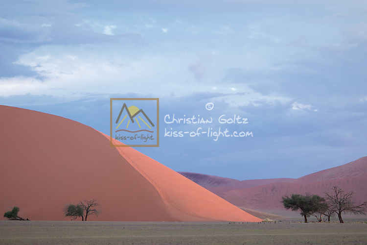 Large red sand dunes loom on the way to Sossusvlei and contrast with green grass after good rains. This is Dune 45, 130 m high.