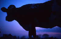 Original Image Photographed in the Summer of 1981 on Kodachrome Color Transparency Film.<br />