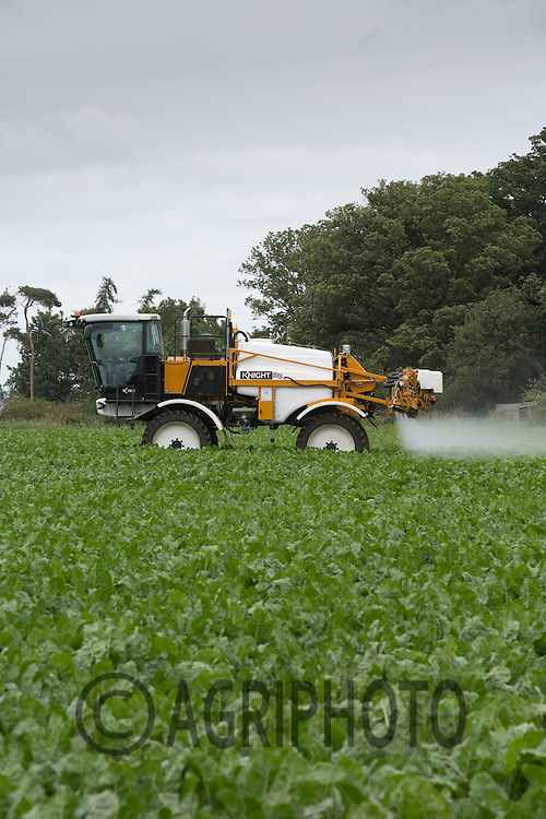 Spraying sugar beet for Black Bean Aphid<br /> Picture Tim Scrivener 07850 303986<br /> &hellip;.Covering agriculture in the UK&hellip;.