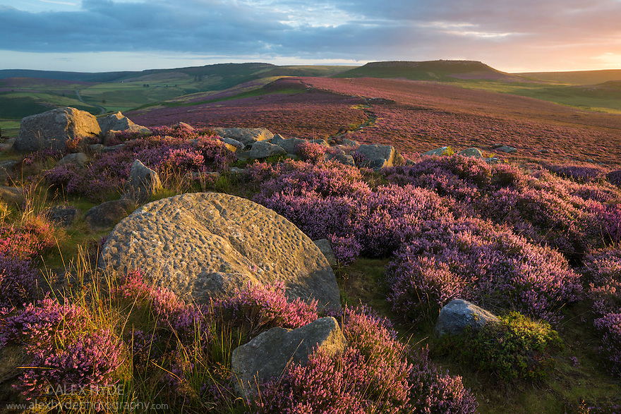 Looking towards Higger Tor from Over Owler Tor with heather in full bloom. An abandoned millsotne can be seen in the foreground. Peak District National Park, Derbyshire, UK. August.