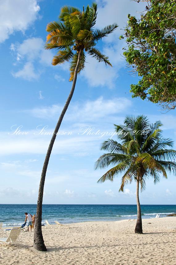 Davis Bay <br /> Carambola Beach Resort<br /> St. Croix<br /> U.S. Virgin Islands