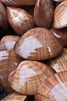 Europe/France/Bretagne/56/Morbihan/ Belle-Ile-en-Mer/Le Palais: Vernis, coquillages utilisé comme appât pour la pêche sur le marché