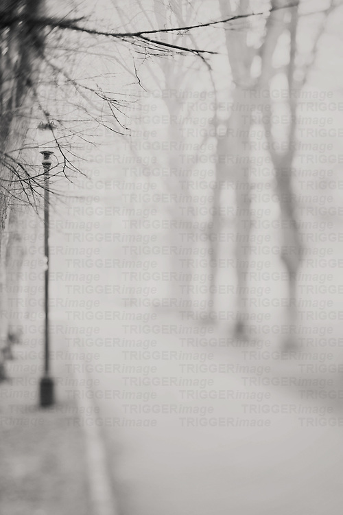 Morning fog surrounds the trees and a street light of a park in Cambridge, England. Photograph in black and white.