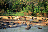Nr Manaus, Amazonas State, Brazil; two workers walking on logs floating in the Amazon river.