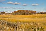 Hammonasset Beach State Park, Madison, CT. Wetlands and woods in autumn.
