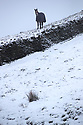 22/01/19<br /> <br /> A horse stands in a field in Flash in the Derbyshire Peak District.<br /> <br /> All Rights Reserved, F Stop Press Ltd +44 (0)7765 242650  www.fstoppress.com rod@fstoppress.com