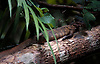 rainforest log