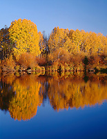 ORCAC_097 - USA, Oregon, Deschutes National Forest, Autumn colored quaking aspen trees reflect in the Deschutes River at sunset.