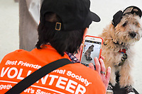 MANHATTAN ,NEW YORK, USA -JUNE 02:   Shaggy the dog  at  Best Friends Pet Super Adoption that held its annual adoption event bringing together more than twenty pet rescue organizations  and hundreds of dogs and cats into contact with people seeking to open their hearts & homes to an animal in need on June 2, 2017 in New York. Joana Toro/VIEW press