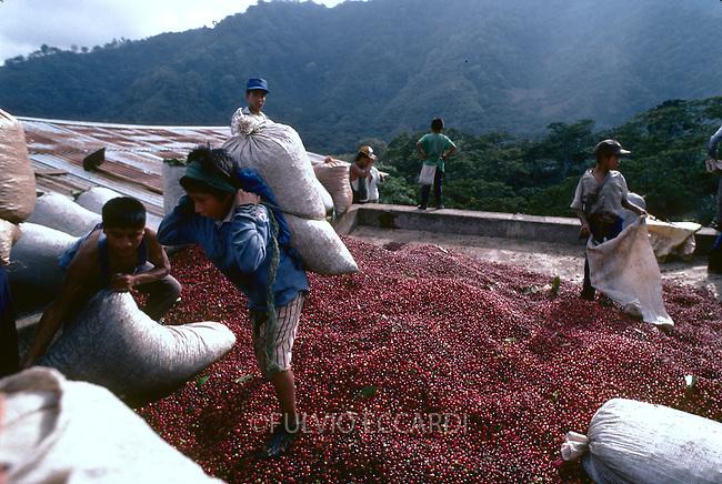 Guatemala, San Pedro La Laguna, Lake, Atitlan, coffee, coffea, organic, arabica, cherry, cherries, harvest, process, wet, mill, ripe, red, people, worker, man, children, child, boy, carry, sack, back