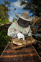 Abelhas Tecnológicas.<br />  <br /> Criado chip  para monitorar desaparecimento de abelhas.<br /> <br /> A população de abelhas registra um expressivo declínio em vários países, inclusive no Brasil, Na busca por respostas que ajudem a combater o problema, o Instituto Tecnológico Vale (ITV), em Belém, no Pará, desenvolveu em colaboração com a Organização de Pesquisa da Comunidade Científica e Industrial (CSIRO), na Austrália.<br /> <br /> Foto Carlos Borges<br /> 31/05/2014