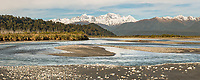 Cook River with Southern Alps, Aoraki Mount Cook and Mount Tasman in background, Westland Tai Poutini National Park, UNESCO World Heritage Area, West Coast, New Zealand, NZ