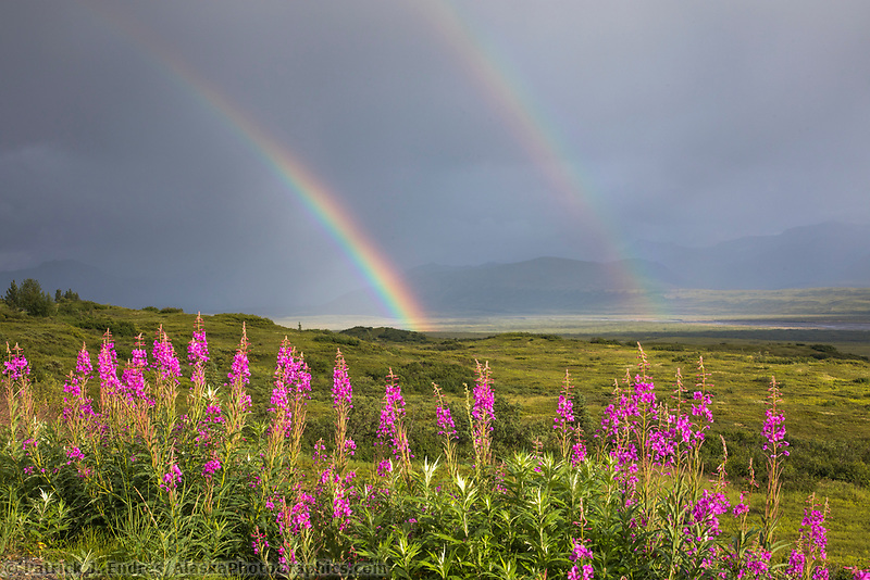 Dark storm clouds and rainbow over the tundra, Denali National Park, Alaska