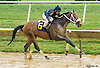 Lucky Rascal winning at Delaware Park on 9/19/16