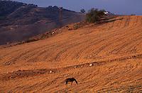 Spanien, Andalusien, Landschaft bei El Torcal