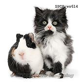 Xavier, ANIMALS, REALISTISCHE TIERE, ANIMALES REALISTICOS, FONDLESS, photos+++++,SPCHWS614,#A#