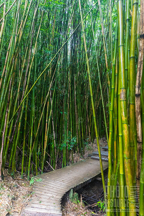 A walkway through a bamboo forest in the Kipahulu district of Haleakala National Park, Maui.