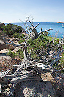 Mittelmeer, Korsika, Frankreich, Küste, mediterran, Strand, Urlaub, Ferien. Mediterranean Sea, Corsica, France, coast, Mediterranean, beach, Vacation, holidays
