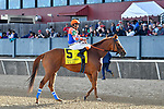 HOT SPRINGS, AR - APRIL 14:Count Fleet Sprint Handicap. Oaklawn Park on April 14, 2018 in Hot Springs,Arkansas. #5 Wilbo with jockey David Cabrera  (Photo by Ted McClenning/Eclipse Sportswire/Getty Images)