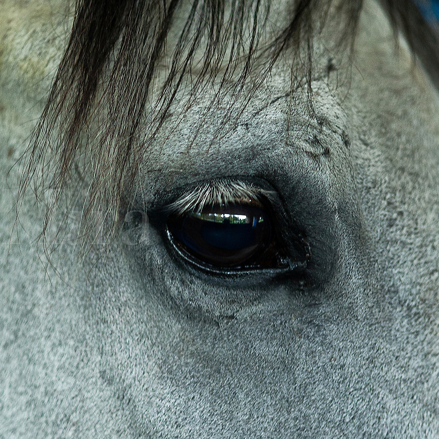 The eye of a horse.