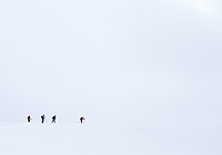 Cross country skiers disappear into the snowy Yellowstone expanse.
