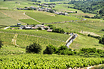 The peloton pass through vineyards during Stage 5 of the Criterium du Dauphine 2017, running 175.5km from La Tour-de Salvagny to Macon, France. 8th June 2017. <br /> Picture: ASO/A.Broadway | Cyclefile<br /> <br /> <br /> All photos usage must carry mandatory copyright credit (&copy; Cyclefile | ASO/A.Broadway)