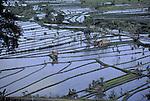 Flooded rice paddies from a hillside near Tirtaganga, Bali, Indonesia.  CD scan from 35mm film..© John Birchard