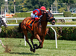 Sandy'z Slew (no. 7) wins the Troy Handicap (Grade III), Aug. 5, 2018 at the Saratoga Race Course, Saratoga Springs, NY.  Ridden by Jose Ortiz and trained by Jeremiah Englehart,  Sandy'z Slew finished 3/4 lengths in front of Blind Ambition (no. 6).  (Photo credit: Bruce Dudek/Eclipse Sportswire)