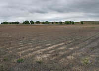 Dried up and abandoned farm land in Crowley County, Colorado, Tuesday, May 17, 2016. Crowley County, once a thriving agricultural community with over 50,000 acres of farm land, sold it's water rights the City of Aurora for municipal use and now farms a little more than 5,000 acres of land. The result has seen dried and dead farm land and abandoned homesteads. Crowley County represents a dire look at how mismanaged water rights can have devastating effects on an already drought prone region.<br /> <br /> Photo by Matt Nager