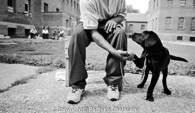 BEACON, NEW YORK:  Tyrone, who is serving an 8 1/2 year sentence, gets 4-month-old Happy to give his paw during a Puppies Behind Bars (PPB) class at Fishkill Correctional Facility. Tyrone's first dog, Yankee, was given to war veteran in Colorado. The program prepares puppies to be service dogs and consists of one day of class a week on topics such as obedience training, grooming, basic care of the dogs. The rest of the week prisoners keep the dogs with them as they go about their daily routine in the prison and train them on their own.