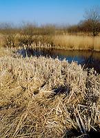 Reedbed, Titchwell RSPB Reserve, Norfolk