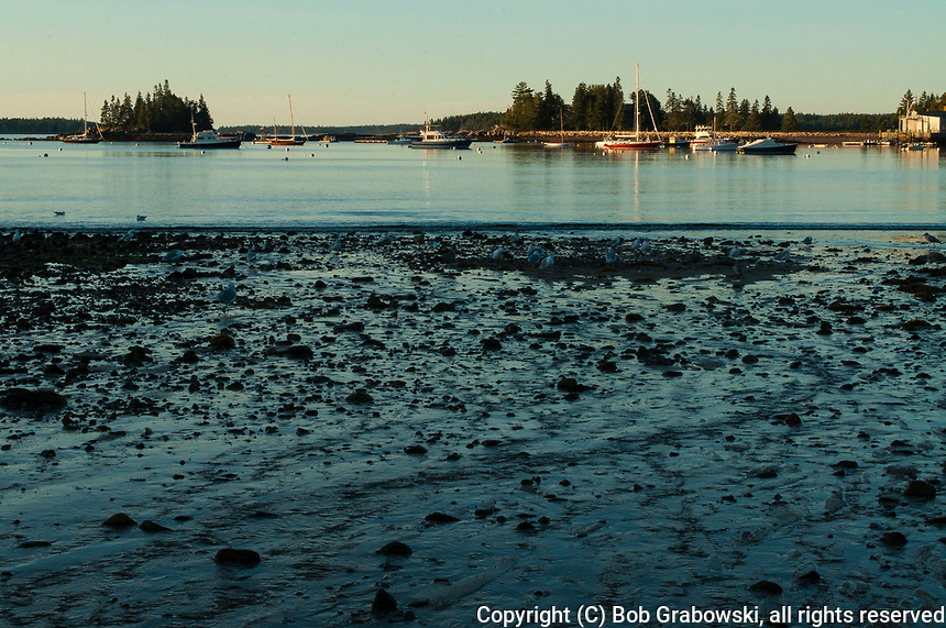 Early morning at Seal Cove on Mt Desert Island In Maine