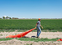 Farmer David Tomky, one of only a few remaining farmers in Cowley County, irrigates his land near the town of Crowley, Colorado, Thursday, May 19, 2016. When most farmers sold their water rights in the 1980s, Tomky and his family held on to their's. As a result, they are still able to irrigate their farm land. Crowley County, once a thriving agricultural community with over 50,000 acres of farm land, sold it's water rights the City of Aurora for municipal use and now farms a little more than 5,000 acres of land. The result has seen dried and dead farm land and abandoned homesteads. Crowley County represents a dire look at how mismanaged water rights can have devastating effects on an already drought prone region.<br /> <br /> Photo by Matt Nager