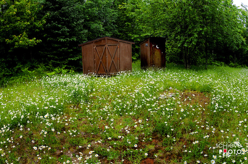 A field of wild Daisies in northern Wisconsin.