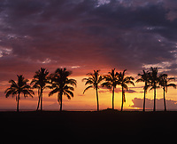 Coconut Palm Trees at Sunset, Maili Beach Park, Waianae, Oahu, Hawaii, USA.