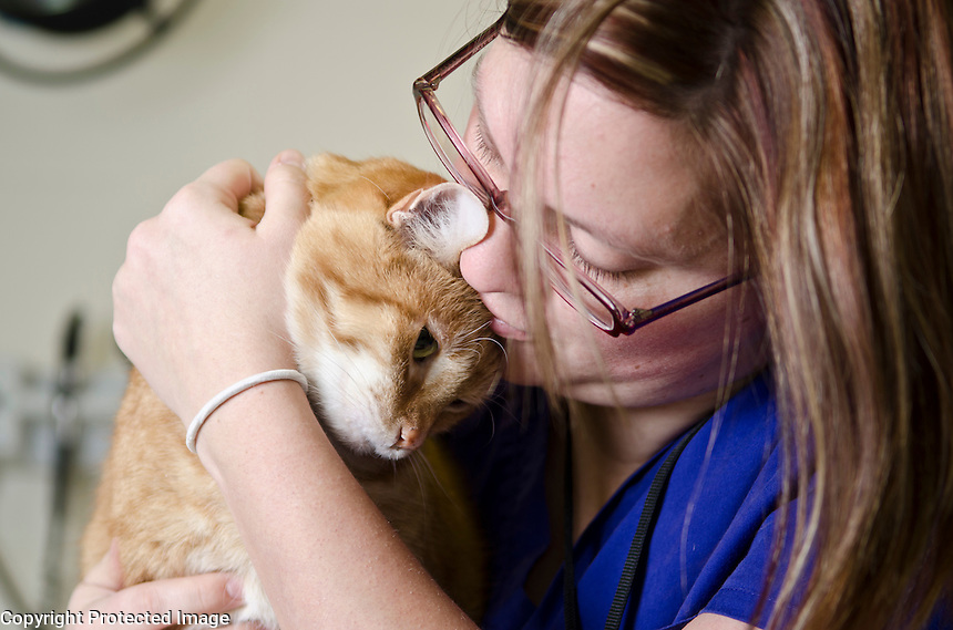 """Mississippi State University, College of Veterinary Medicine, ophthalmologist, Dr. Betbeze and clinical technician, Stephanie Dray, with feline patient, """"Fish""""."""