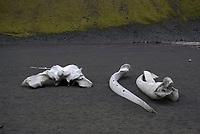 Fin whale (Balaenoptera physalus) bones, skull and jaws, Jan Mayen Island, North Atlantic Ocean