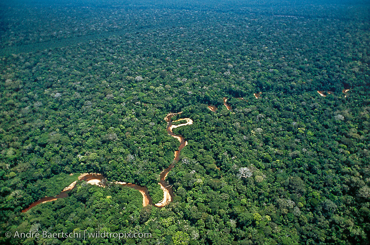Meandering river in lowland tropical rainforest, Tambopata Reserve, Madre de Dios, Peru.