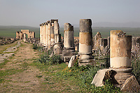 The Triumphal Arch of Caracalla, built 217 AD by the city's governor Marcus Aurelius Sebastenus in honour of Emperor Caracalla, 188-217 AD, and his mother Julia Domna, and the main street or Decumanus Maximus with the ruined Ionic columns of the Forum or marketplace lining the street, Volubilis, Northern Morocco. Volubilis was founded in the 3rd century BC by the Phoenicians and was a Roman settlement from the 1st century AD. Volubilis was a thriving Roman olive growing town until 280 AD and was settled until the 11th century. The buildings were largely destroyed by an earthquake in the 18th century and have since been excavated and partly restored. Volubilis was listed as a UNESCO World Heritage Site in 1997. Picture by Manuel Cohen