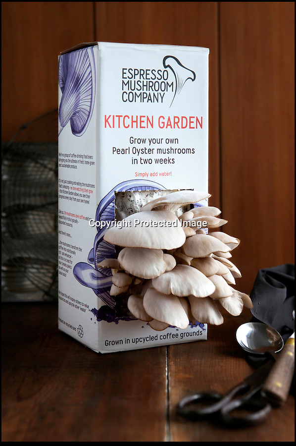 BNPS.co.uk (01202 558833)<br /> Pic: HeatherWilkinson/BNPS<br /> <br /> Tetra pack bursting with fresh mushrooms.<br /> <br /> Old coffee turned into a mushrooming new business.<br /> <br /> Brothers Alex and Robbie Georgiou and their friend John Coombs collect mountains of old coffee grounds from cafes and use it to produce revolutionary new fresh mushroom tetra packs.<br /> <br /> The waste grounds would otherwise be sent to landfill - but instead the trio have used them to grow handy packs of unique-tasting oyster mushrooms which can just be watered and then left for the mushrooms to sprout.<br /> <br /> In 2013 they collected 10 tonnes of coffee grounds from cafes and coffee shops around Brighton, East Sussex - enough to make one million espressos, the new Kitchen Gardens ensure that foodies can now find a ecological use for the old coffee, and grow fresh mushrooms at the same time.