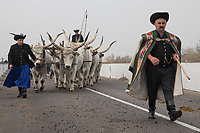 A group of herdsmen cross a bridge with oxes during a celebration of the end of the grazing season in the Great Hungarian Plains in Hortobagy, 200 km (124 miles) east of Budapest in Hortobagy, Hungary on Oct. 21, 2017. ATTILA VOLGYI