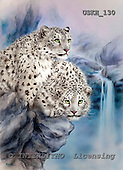 Kayomi, REALISTIC ANIMALS, paintings, snow leopard, RockyAdventure_M, USKH130,#A# realistische Tiere, realista, illustrations, pinturas