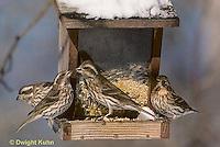 BF02-015z  Bird Feeder - birds at feeder in winter