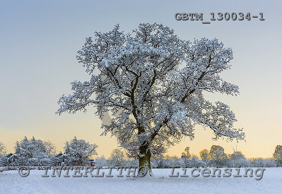 Tom Mackie, CHRISTMAS LANDSCAPE, photos,+Lone Tree in Winter, Norfolk, England,Britain, British, EU, East Anglia, England, Europa, Europe, Norfolk, UK, horizontal, ho+rizontals, lone tree, oak, single, snow, tree, trees, weather, winter+Lone Tree in Winter, Norfolk, England,Britain, British, EU, East Anglia, England, Europa, Europe, Norfolk, UK, horizontal, ho+rizontals, lone tree, oak, single, snow, tree, trees, weather, winter+,GBTM130034-1,#xl# Landschaften, Weihnachten, paisajes, Navidad