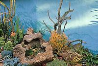 Euphorbia tirucalli w/ Alluaudia procera. Quail Botanic