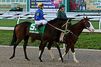January 17, 2015:Hero of Humor (KY) with Alexander Reznikov in the Lecomte Stakes at the New Orleans Fairgrounds course. Steve Dalmado/ESW/CSM