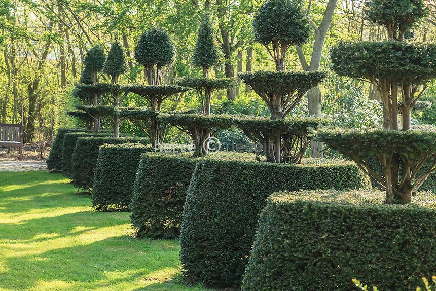 Jardin de la Ferme du Mont des Récollets : alignement de topiaires d'ifs. // France, garden of Ferme du Mont des Récollets, topiaries yews