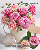 Alfredo, FLOWERS, BLUMEN, FLORES, photos+++++,BRTOLMN40050,#f#, EVERYDAY ,rose,roses