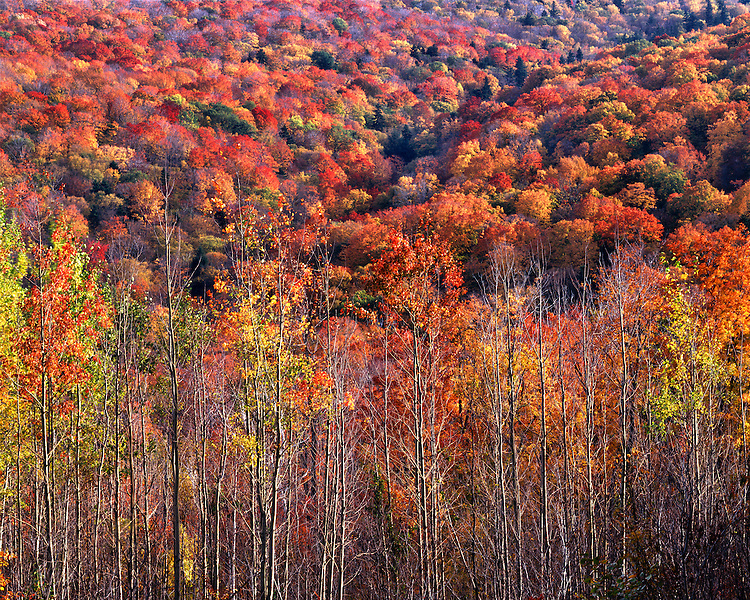 Hillside in fall color; Green Mountain National Forest, VT