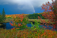rainbow and maple trees in autumn color<br /> Oxtongue Lake<br /> Ontario<br /> Canada